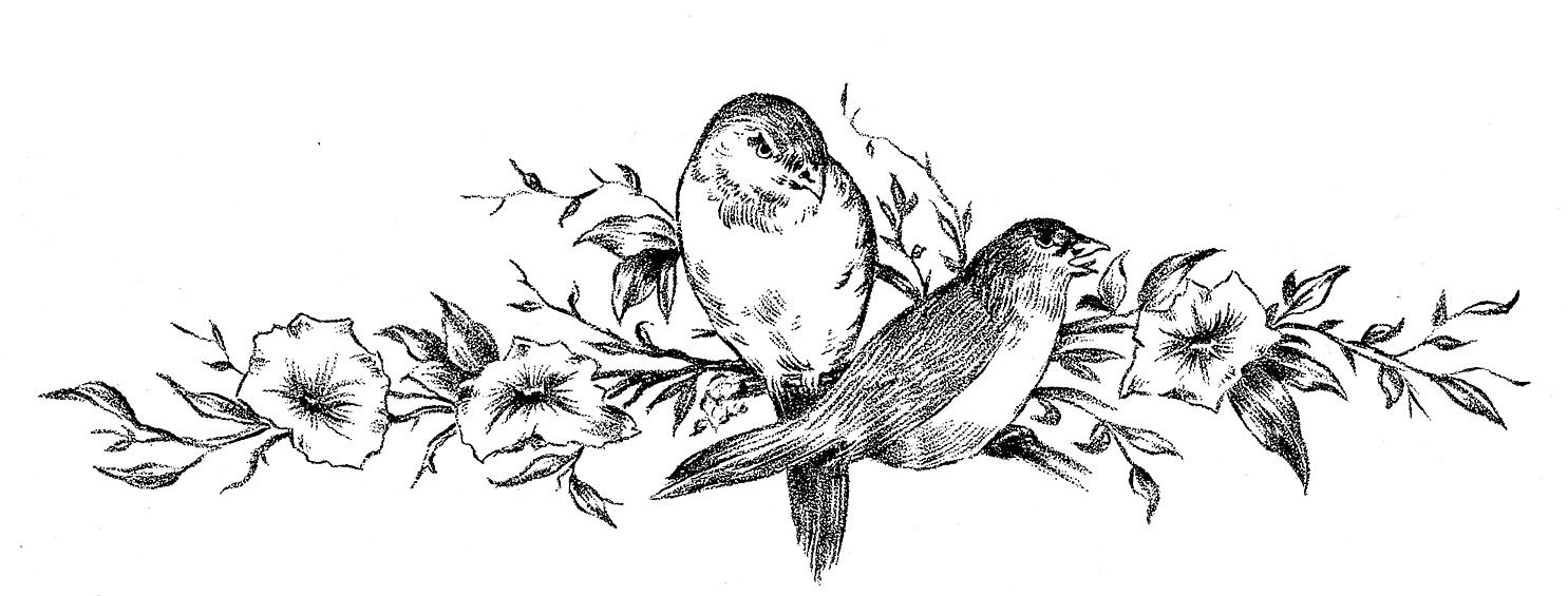 sketchofbirds.jpg