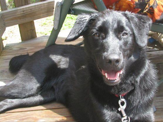 Our dog, Jack